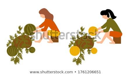 Karpuz kavun alan kadın çiftçi Stok fotoğraf © simazoran