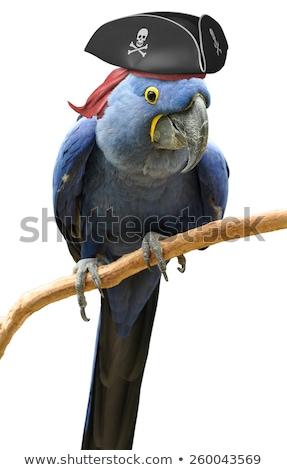 Pirata papagaio ilustração natureza pena seis Foto stock © colematt