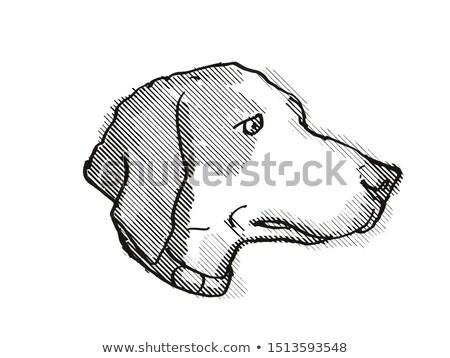 Harrier Dog Breed Cartoon Retro Drawing Stock photo © patrimonio