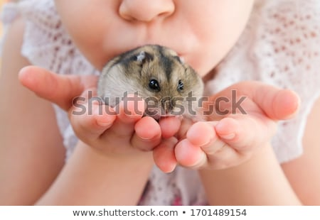 hamster rodent animal Stock photo © yupiramos