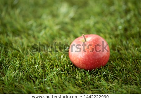 close up of ripe red apple on artificial grass Stock photo © dolgachov
