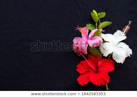 красный гибискуса цветы темно листьев Сток-фото © oksanika