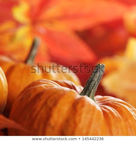 Tökök őszi levelek szelektív fókusz őszi természet levél Stock fotó © dashapetrenko