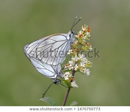 borboleta · ação · isolado · flor · feliz · verão - foto stock © ansonstock