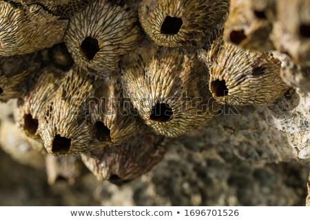 hayvanlar · cilt · doğa · dizayn · saç · kaplan - stok fotoğraf © pzaxe