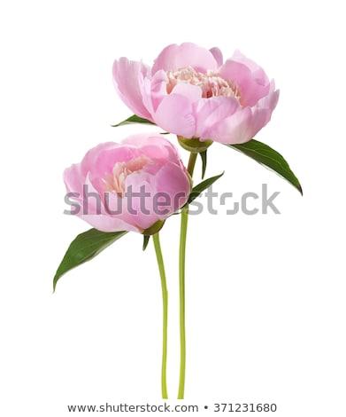 gyengédség · virágok · meghitt · színes · kép · érzéki · pár - stock fotó © dolgachov