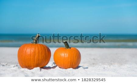 Florida · oranje · gewas · velden · bomen - stockfoto © lisafx