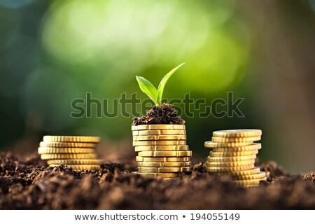 ドル 緑 芽 ビジネス ストックフォト © devon