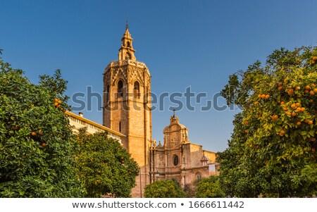 Narancsfa Valencia katedrális fák érett narancsok Stock fotó © rglinsky77