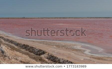 соль Намибия Африка пейзаж озеро промышленных Сток-фото © imagex