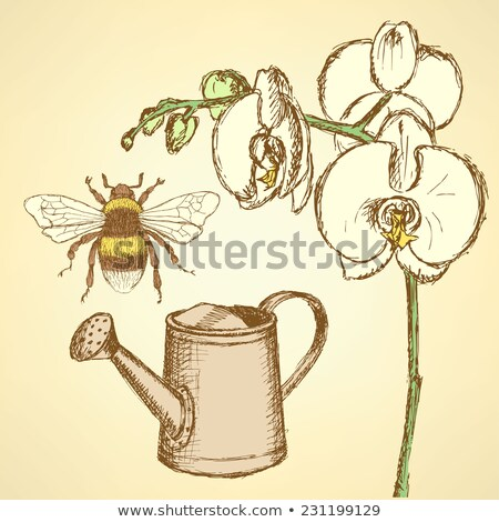 Kroki orkide sulama vektör bağbozumu çiçek Stok fotoğraf © kali