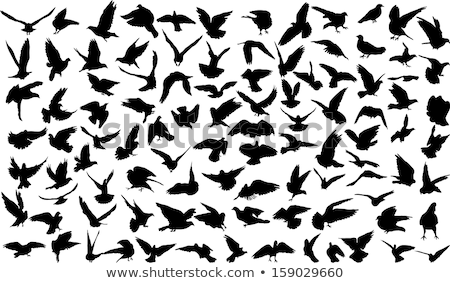 sziluett · háttér · madár · fekete · szabadság · fehér - stock fotó © ntnt