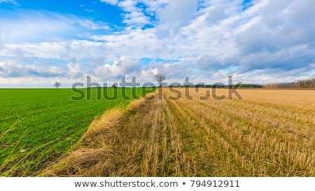 Wheat Stubble Field Stock Photo C Igor Stevanovic