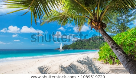 Zomervakantie Jamaica strand persoon kaart Stockfoto © stevanovicigor