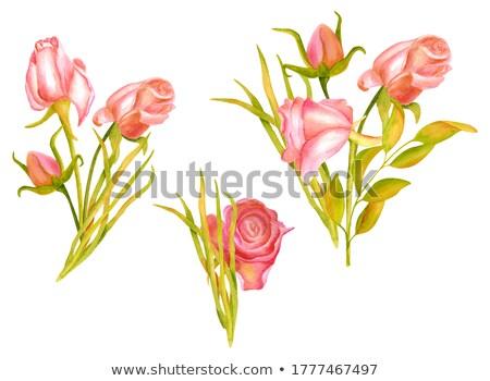 rózsák · vízfesték · fehér · izolált · rózsa · piros - stock fotó © artibelka