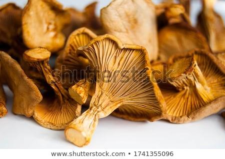 dried mushroom chanterelle stock photo © everelative