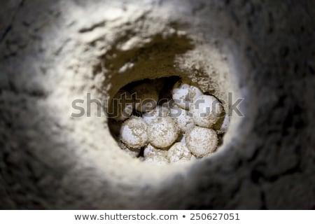 Stok fotoğraf: Sea Turtle Eggs On The Beach