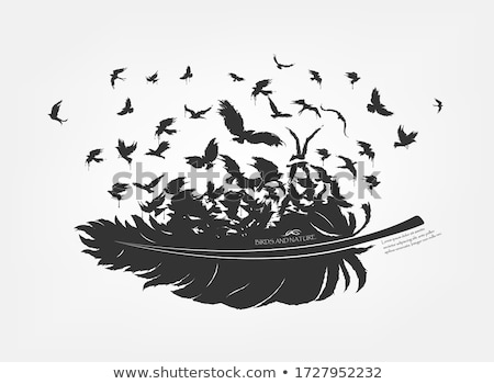 feathers with flying birds vector stock photo © beaubelle