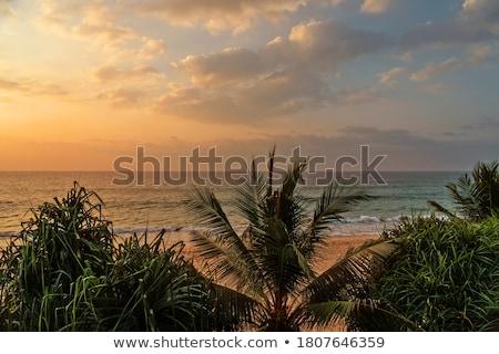 Foto stock: Tropicales · mar · puesta · de · sol · palmas · hermosa · paisaje