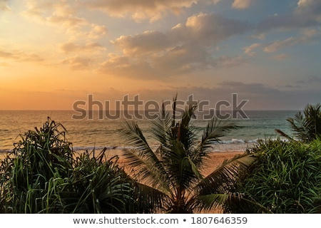 puesta · de · sol · tropicales · palmas · agua · sol · mar - foto stock © mikko