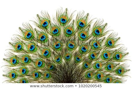 abstrato · pavão · pena · natureza · pássaro · verde - foto stock © pathakdesigner