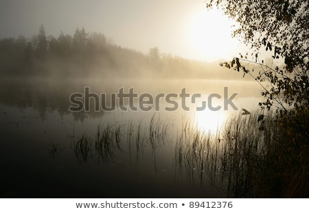 fog over lake on november morning stock photo © pixelsaway