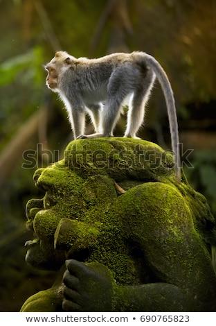 aap · bos · familie · gezicht · kind · groene - stockfoto © mariusz_prusaczyk