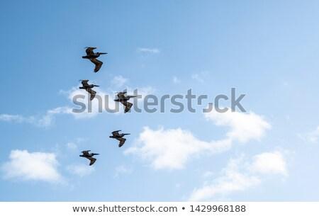 Groupe battant formation cinquième nature orange Photo stock © taviphoto