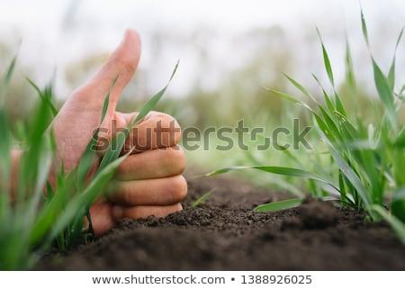 Farmer's hand over young green wheat, crop protection concept Stock photo © stevanovicigor