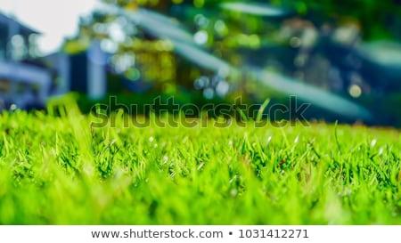 beautiful green sping rural planet stock photo © artush