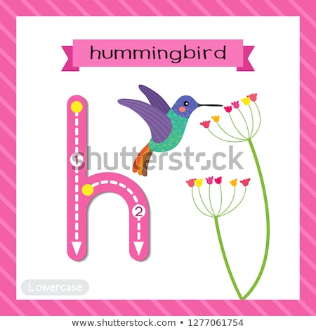 Flashcard letter H is for hummingbird Stock photo © bluering
