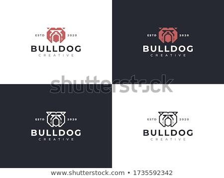 bulldog logo concept stock photo © sdcrea