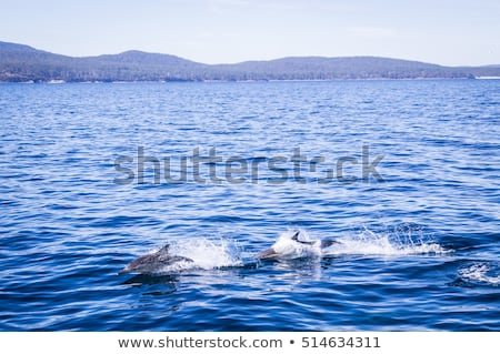 Dolfijnen springen eiland wild dolfijn school Stockfoto © julianpetersphotos