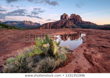 cathedral rock stock photo © pmilota