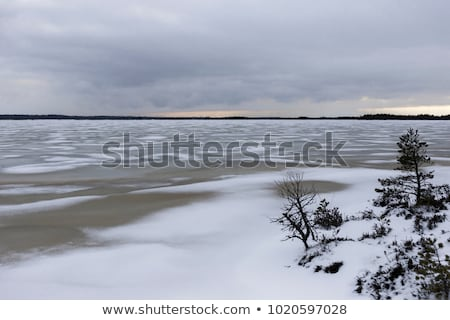 Stock photo: Pine trees covered in snow on skyline