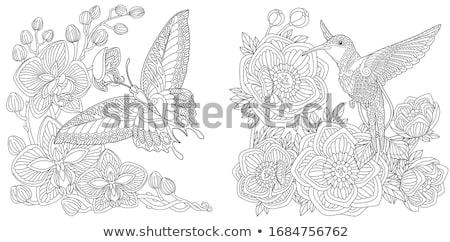 Oiseau page dessinés à la main livre de coloriage Photo stock © imagepluss