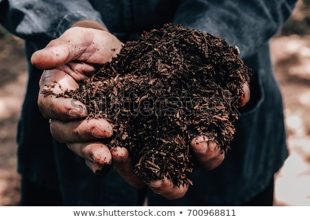 Quality soil in male gardener hands Stock photo © stevanovicigor