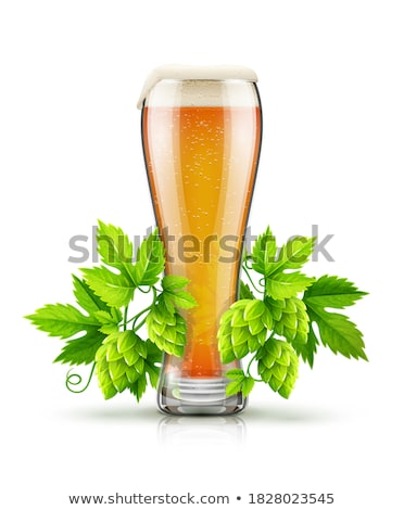 Glass of light lager beer with hop plant buds Stock photo © LoopAll