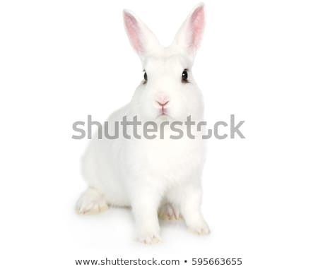 White Rabbit isolated. cute Hare. bunny Animal Stock photo © popaukropa