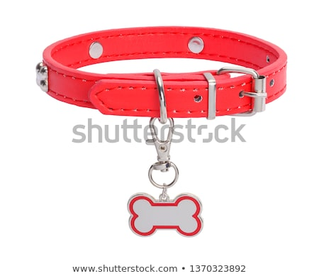 Stock photo: collar for dog