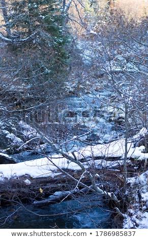 Beautiful icicles and snow near the creek Stock photo © Kotenko