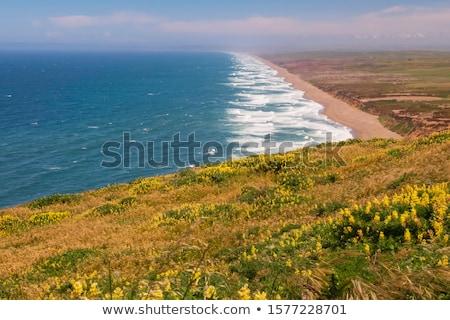 желтый · Буш · точки · Сан-Франциско · Калифорния · США - Сток-фото © dirkr