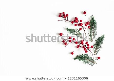 自然 クリスマス レイアウト 先頭 表示 ストックフォト © solarseven