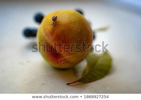 pêssego · tradicional · chinês · cor · asiático · doce - foto stock © craig