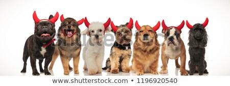 douze · chiens · rangée · faible · montagne · groupe - photo stock © feedough