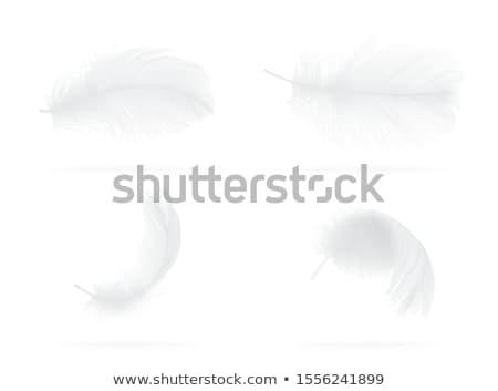 小 羽毛 セット モノクロ 羽毛 描いた ストックフォト © blackmoon979