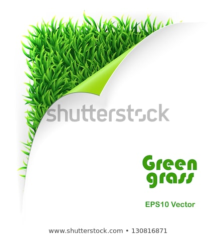 Groen gras groene hoek helling bloem Stockfoto © barbaliss