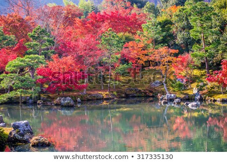 pine trees at hamarikyu gardens park in tokyo Stock photo © dolgachov
