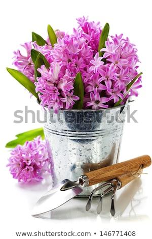 Gardening tools and hyacinth isolated on white Stock photo © Melnyk