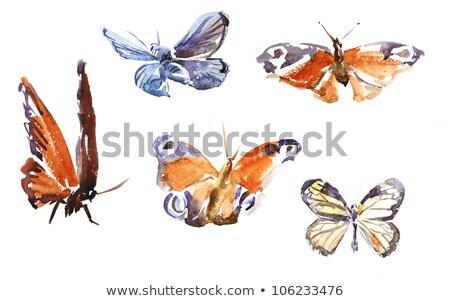 insecten · vlinders · geïsoleerd · witte · mooie · vlinder - stockfoto © blackmoon979